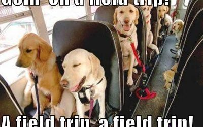 funny-dog-pictures-goin-on-a-field-trip-a-field-trip-a-field-trip